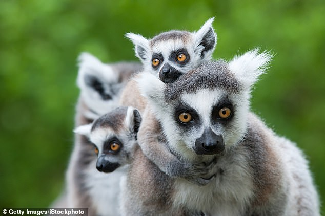 Madagascar is a dream destination for outdoor enthusiasts but its main draw is wildlife. Its currency is down 22 per cent on last year