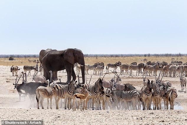 The Namibian dollar hasdropped in line with the South African rand. One of the best places to visit in Namibia isEtosha National Park, pictured